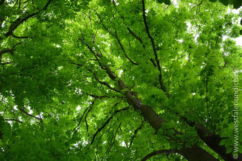 Bild 2 - Blätterdach bei der Emmer