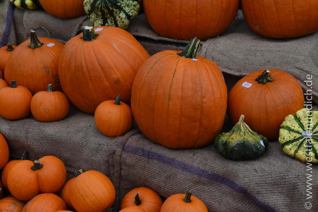 Steinheim - Oktoberfest am Lipper Tor - Bild 04