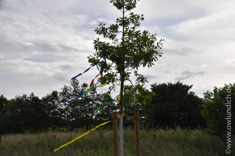 Das Lebensbaumprojekt - Lebensbäume für Neugeborene 2015 - Bild 04