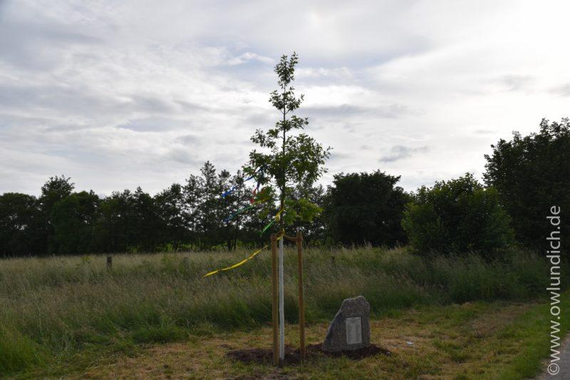 Das Lebensbaumprojekt - Lebensbäume für Neugeborene 2015 - Bild 02