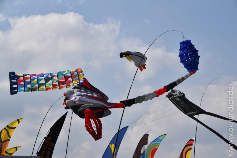 Steinheim - 3.Drachenfest Vinsebeck 2016 - Bild 33